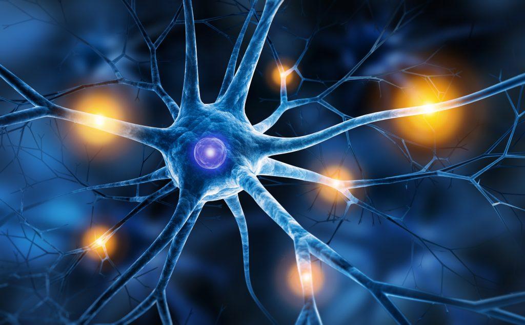 Image illustrant le système nerveux autonome pour la gestion des émotions par l'intermédiaire de la respiration